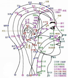 頭のツボ|鎌ヶ谷市(新鎌ヶ谷)の鍼灸院